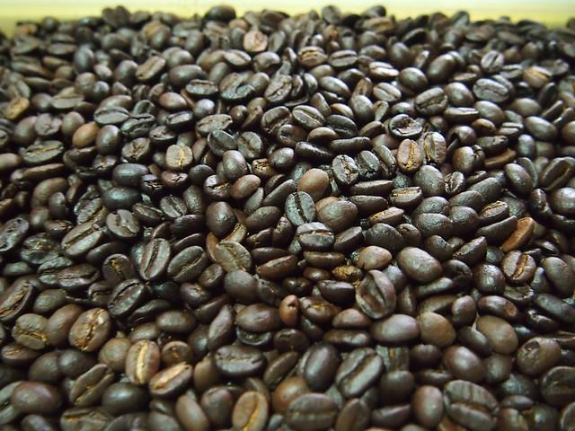 コピ・ルアク -マタラク・ルワック・コーヒー-/Kopi Luwak -Mataram Loewak Coffee-