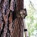 Hatchet in a Tree