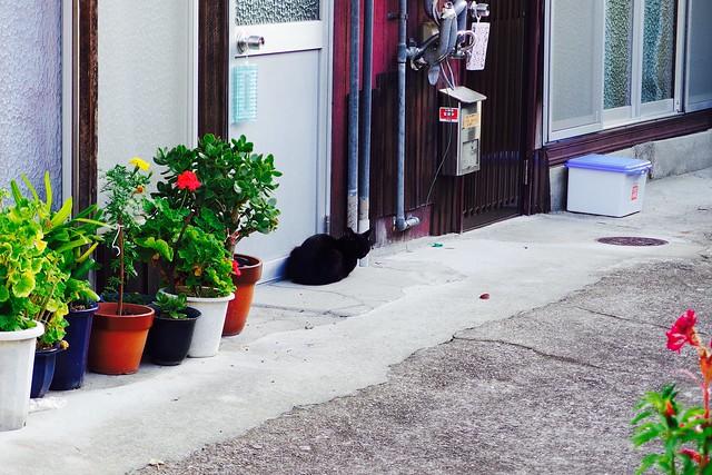 Today's Cat@2017-10-02