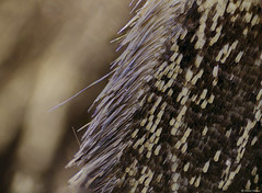 Moth Wing Cilia and Scales