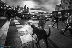 Callejeando / Street