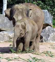 ~ elephant training session ~