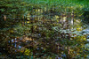 Homage to Monet by trochford