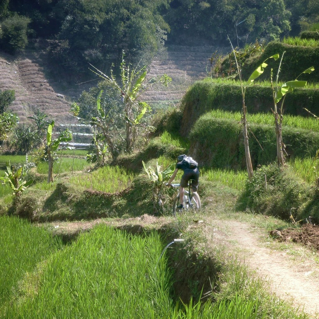 The trail through terraces of ricefields