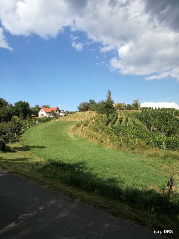 Weinberge Rechnitz