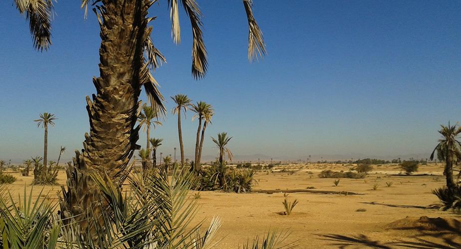Stedentrip Marrakech: la Palmeraie | Mooistestedentrips.nl