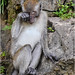 Tiring, all this monkeying around