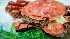 Hairy crab – cooked and ready to eat