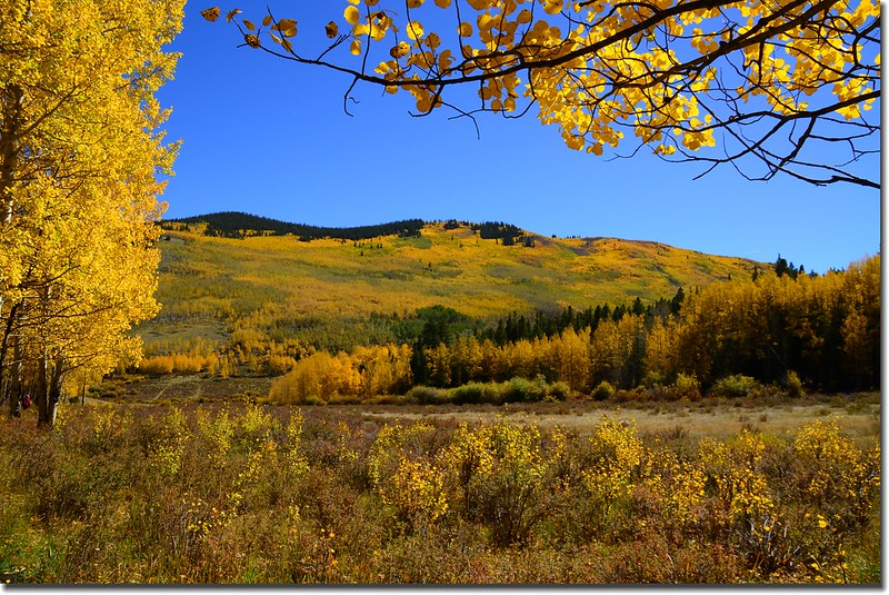 Fall colors, Kenosha Pass  (10)
