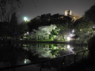 千葉公園綿打池 夜桜ライトアップ09