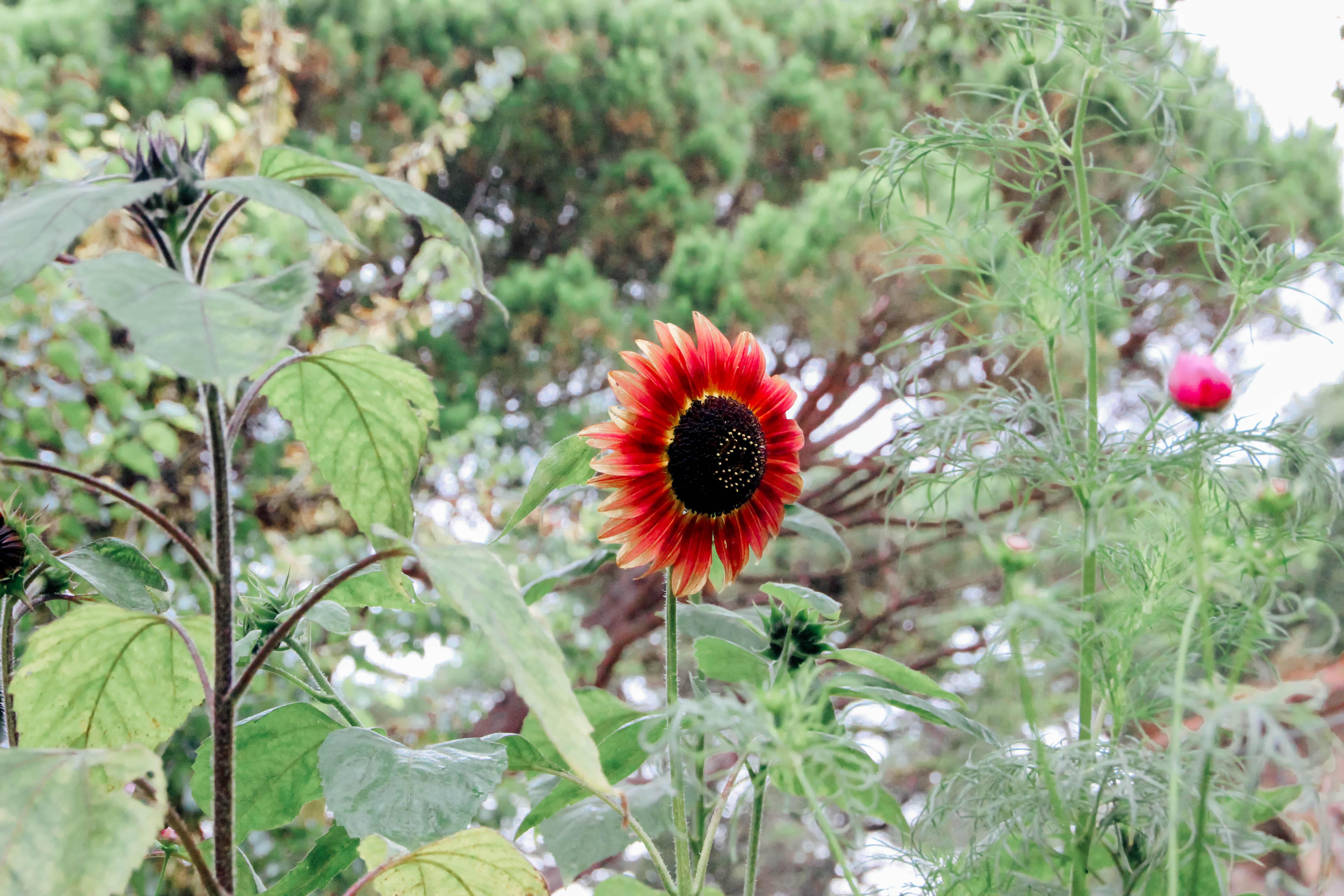 Sintra flowers