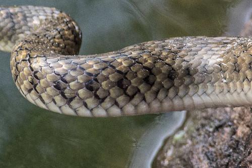 snake close up