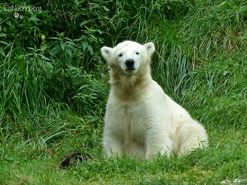 Giovanna - Quintana - Eisbären - TP Hellabrunn