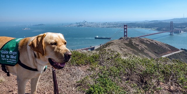 Buzz and the Golden Gate