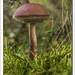 Mushroom and Moss by Paul Simpson Photography