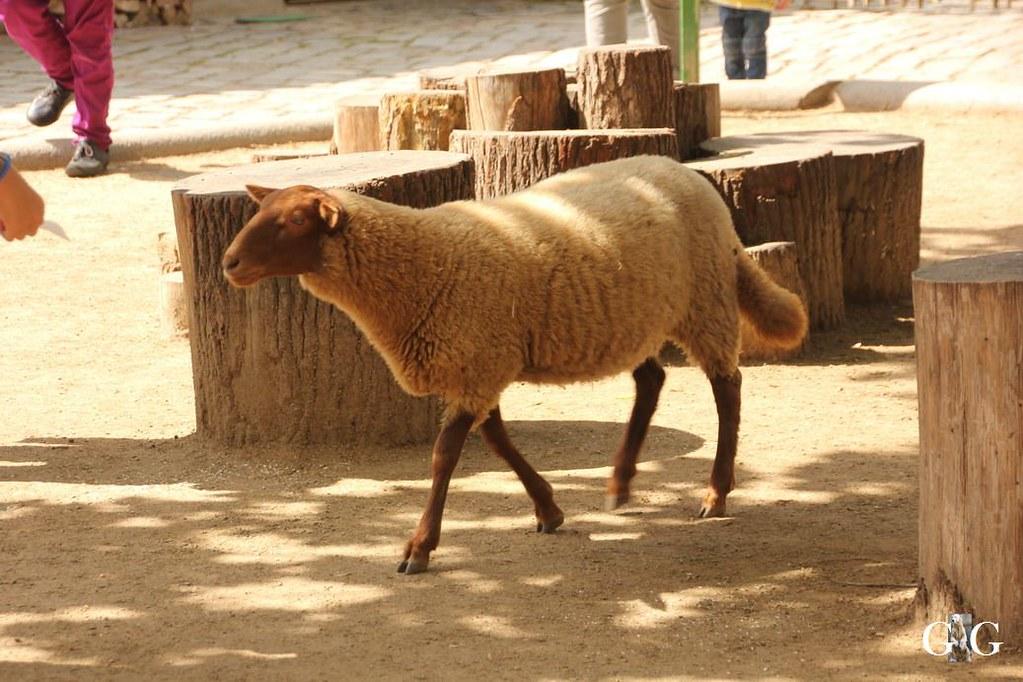 Besuch Zoo Berlin 13.08.17111