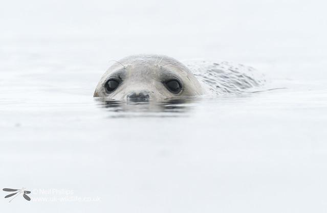 Seal-12