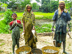 Mala Begum and her husband are showing fish harvested from their pond in Sylhet, Bangladesh. Photo by Md. Badrul Alam
