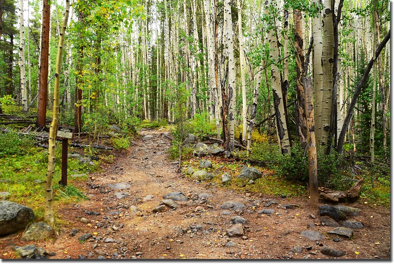 This route enters the Collegiate Peaks Wilderness area