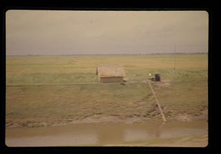 Pump Irrigation Near Comilla = コミラ付近におけるポンプ潅漑