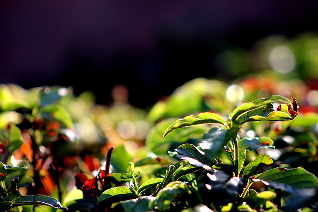 Leaves Color Contrast 1, Canon EOS 700D, Canon EF 75-300mm f/4-5.6