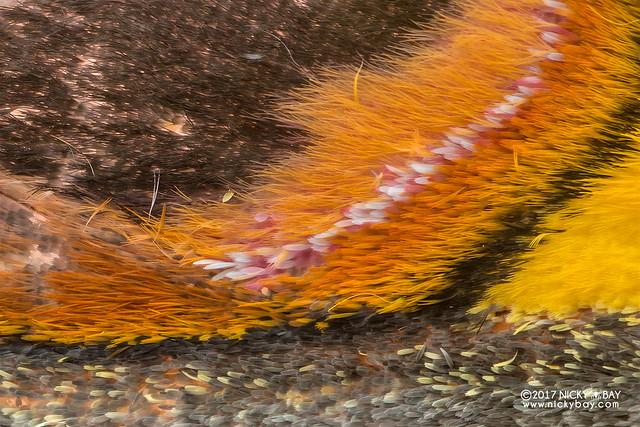 Moth wing - DSC_8444