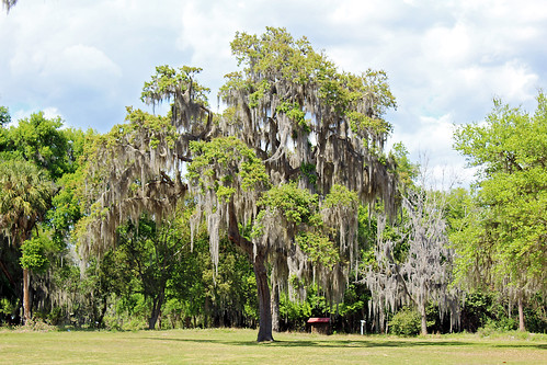 landscape park trees spanishmoss inverness florida