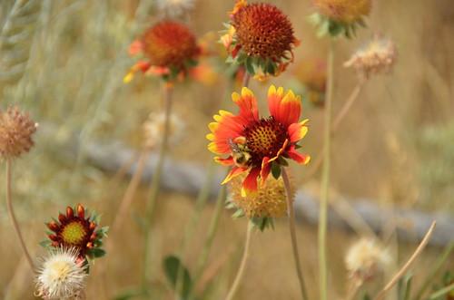 Great Falls - nature walk flower