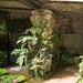 L2017_4477 - Dewstow House  & Grottoes, Caerwent