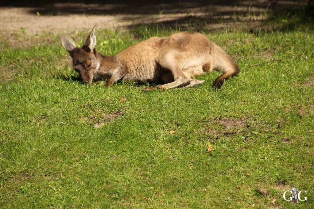 Besuch Tierpark Friedrichsfelde 20.08.1767