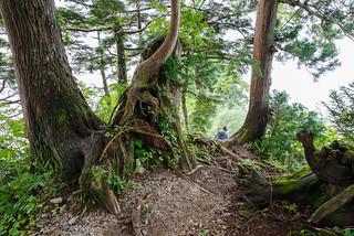 立山杉の急降下が続く