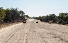 2017, Chobe national park