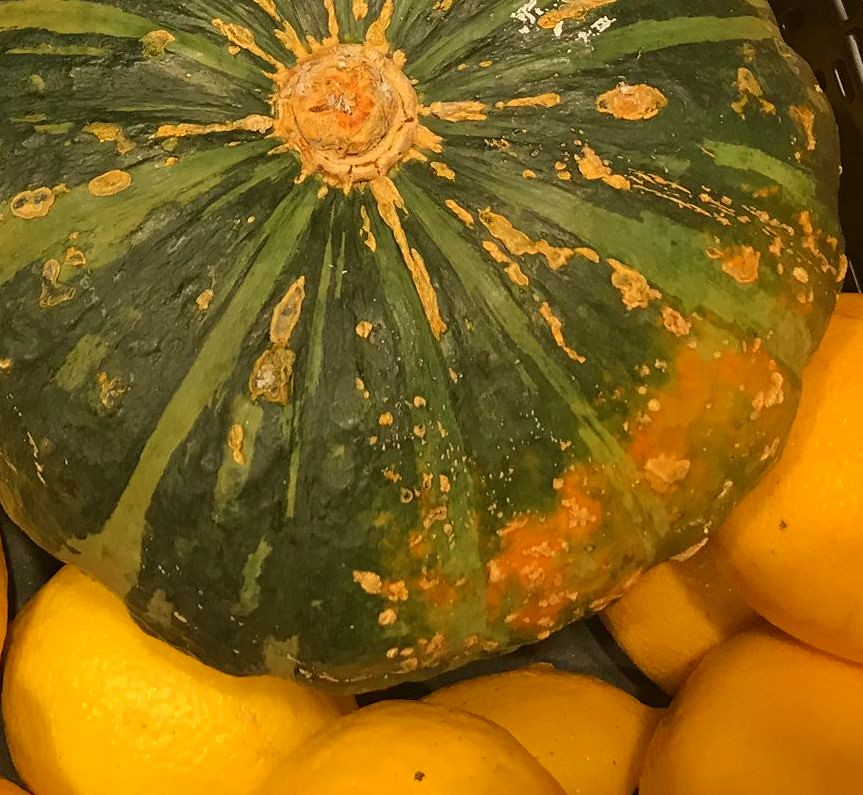 Acorn squash is a kind of pumpkin