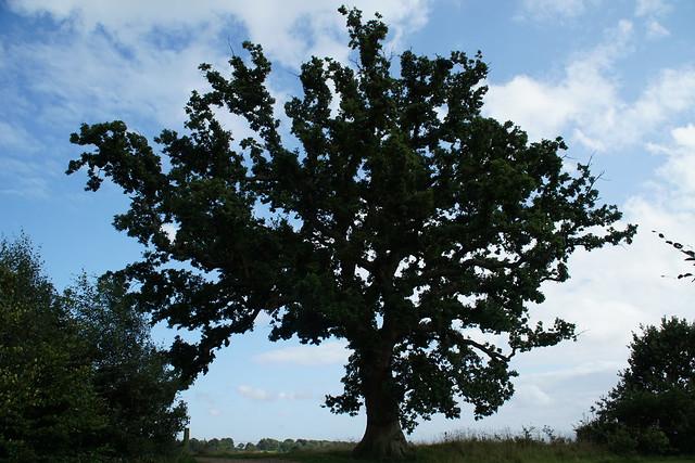 the old oak tree, Sony ILCE-6000, Sony E PZ 18-105mm F4 G OSS