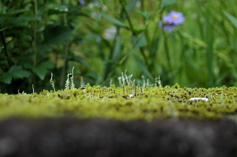 苔類と地衣類の世界_201708