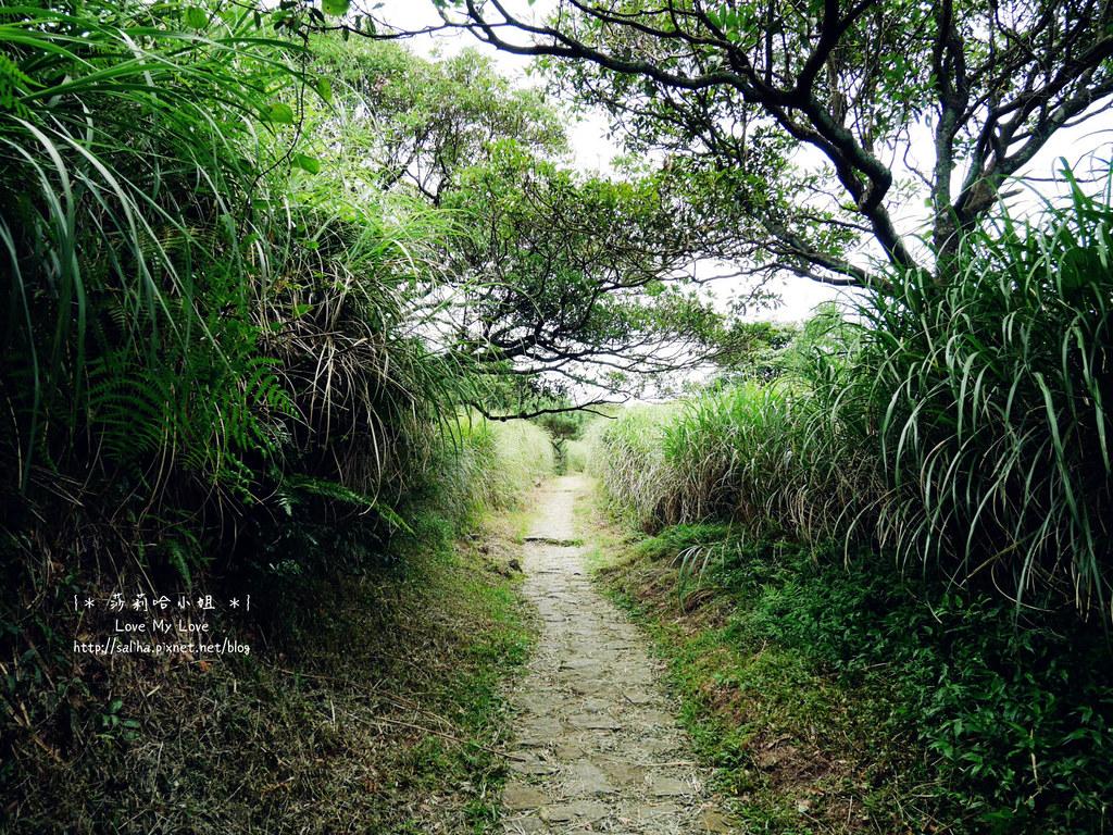 陽明山一日遊景點推薦絹絲瀑布步道 (16)