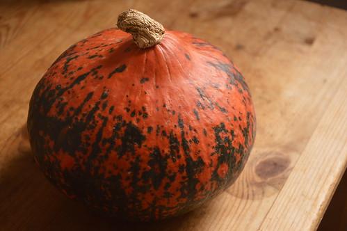 ドイツ_かぼちゃ_北海道_Hokkaido