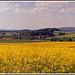 Blühende Landschaft by günter mengedoth