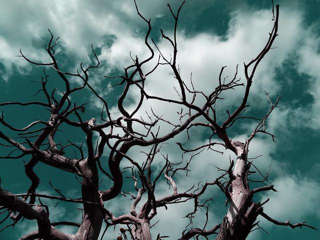 L'arbre de Merlin