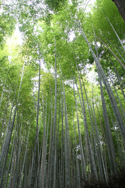 Bamboo Grove. Kyoto Prefecture, Canon EOS M, Canon EF-M 18-55mm f/3.5-5.6 IS STM