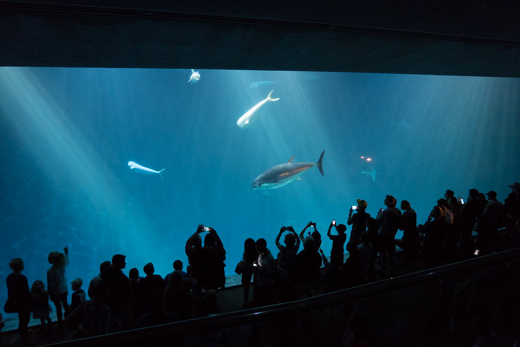 Huge display at Monterey Bay Aquarium