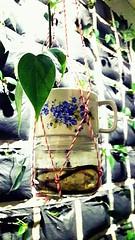 blue flowers in the soundgarden 43