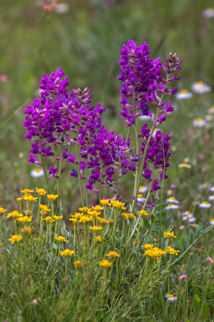 Wild-Flowers-10-7D2-081117