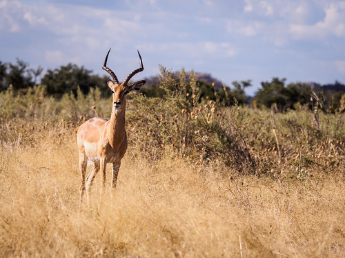 hiver botswana chobe juillet faune mammals réservenature nature northwestdistrict bw