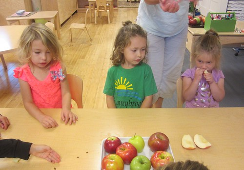 counting seeds from an apples