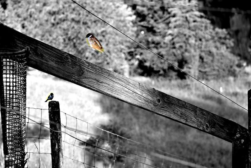 Sparrow 11.06 (1)