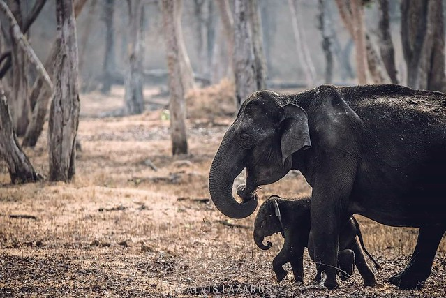 """Mom and Me 