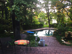 Lovely evening in the backyard