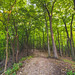 Hike through the forest - Great River Bluffs State Park, Winona, Minnesota