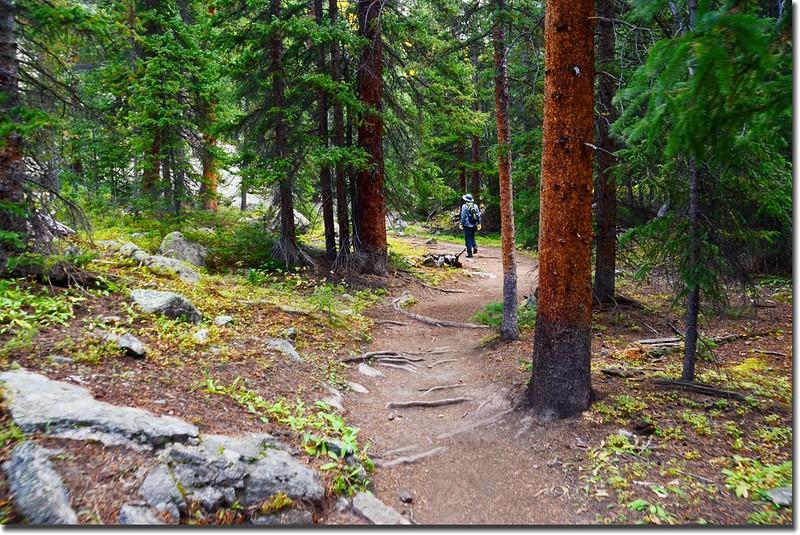 Mount Yale Trail (2)